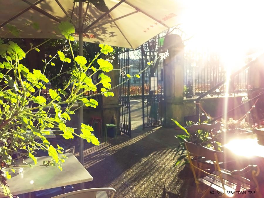 Кафе «Ботаника»